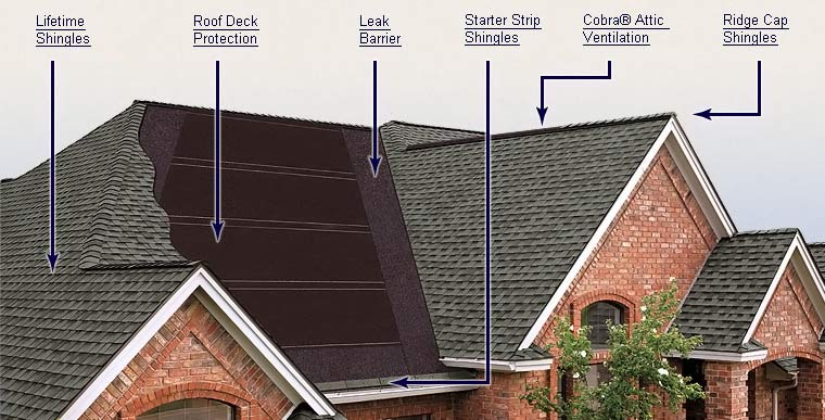 shingles diagram